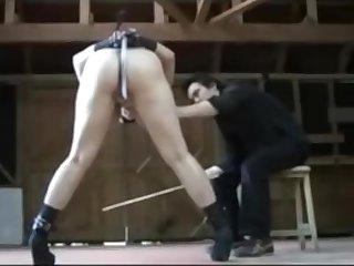 Mature Pony Training